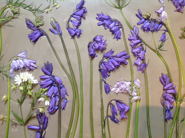 pressed bluebells in clay