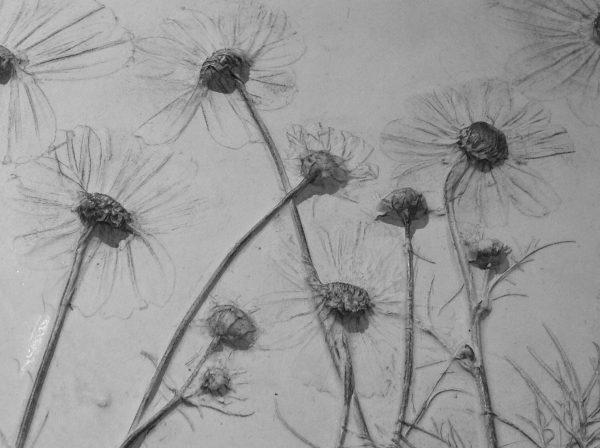 botanic casting