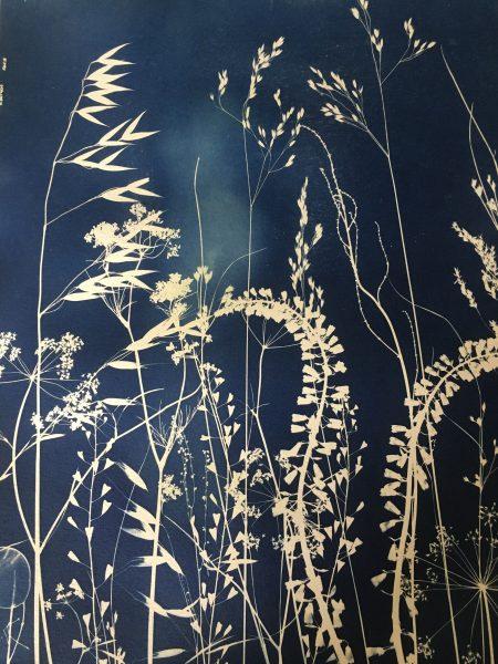 cyanotype, wilderness