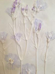 Lysianthus Bas Relief